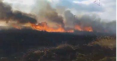 Пожарът в Орлово блато е потушен