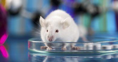 Учени създадоха хибрид между човек и мишка